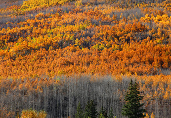 Bright color autumn trees on mountains