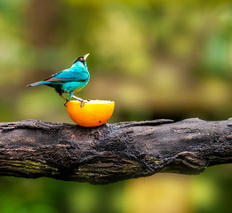 Blue bird sitting on a branch, wildlife