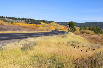 Scenic drive in yellowstone