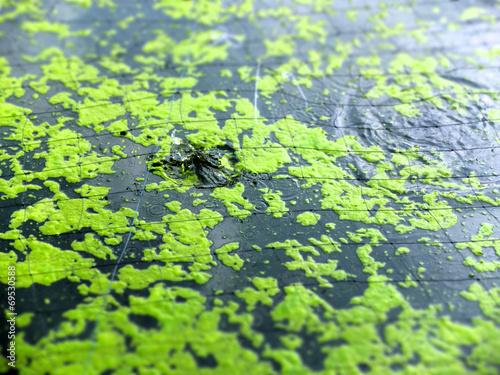 canvas print picture Algen auf Wasseroberfläche