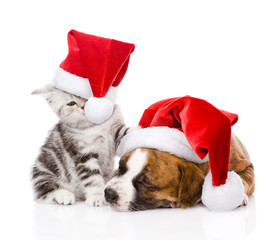 Scottish kitten and small puppy with santa hat. isolated on whit