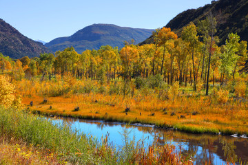 Colorful aspen trees by Gunnison river in Colorado