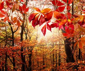 Herbstlicher Wald :)