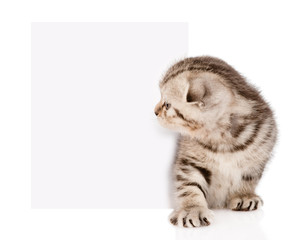 tabby kitten peeking out of a blank sign. isolated on white back
