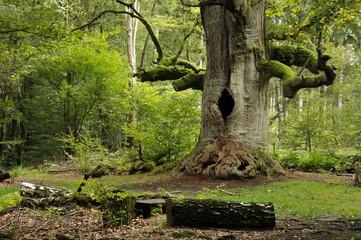 Hohler Baum
