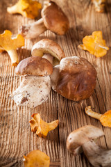 Mix of mushrooms on wooden planks