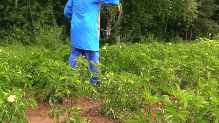 Gardener man spray vegetables in garden