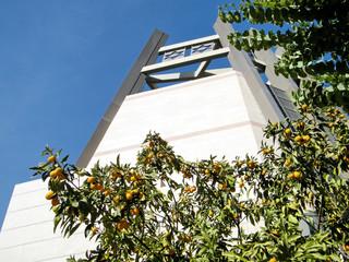 Bar-Ilan University Fortunella margarita tree and Jewish Center