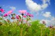 canvas print picture - Bunte Blumenwiese im Sommer
