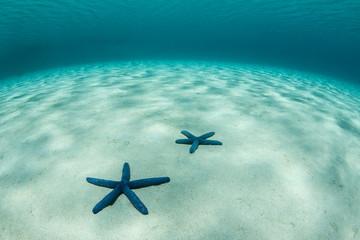 Blue Sea Stars on Sand