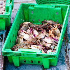 Crabs in the green plastic box at the fish market
