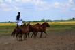 Leinwanddruck Bild - horse riding