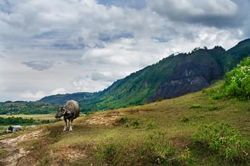 Landscape of Island Samosir, Lake Toba. Sumatra, Indonesia