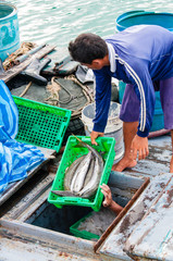 Thai fishermen sorting day capture in Thailand
