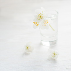 Jasmine flowers over light background