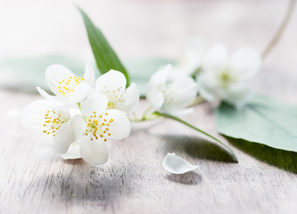 Jasmine flowers over wooden background