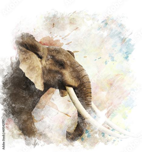 Watercolor Image Of  Elephant - 69542197