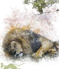 Watercolor Image Of  Sleeping Lion