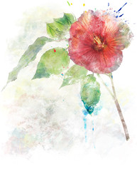 Watercolor Image Of  Hibiscus Flower