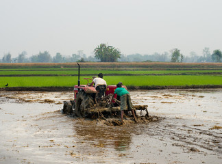 Tractor plowing a rice field in Chitvan, Nepal