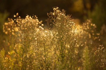 Meadow flowers in the evening sun