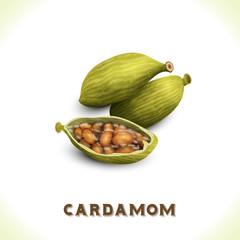 Cardamom isolated on white