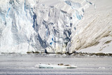 Antarctica - Seals In Natural Habitat