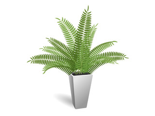 Ornamental plant. Fern in a pot. On a white background.