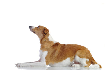 La Sfinge Canina