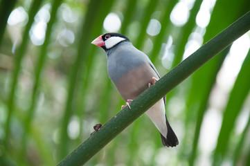 Small birds light blue