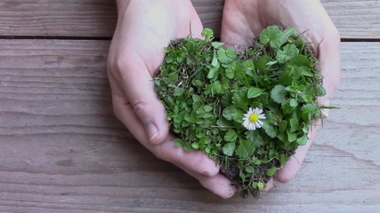 hands served heart covered with grass