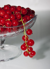 Red currant on a gray background in a vase and one bunch of curr