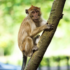 Relaxed monkey resting on the tree