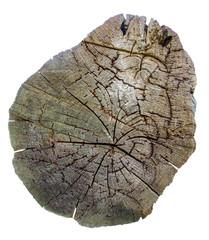 Isolated Tree Stump
