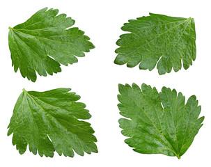Celery leaf set