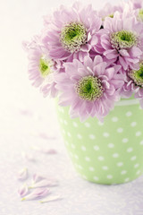 Pink chrysanthemum flowers1