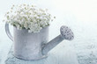 Watering can filled with white flowers