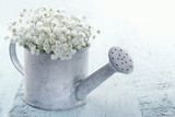 Watering can filled with white flowers - 69562126