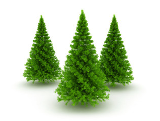 Three christmas pine trees
