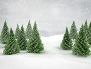 Pines trees winter scene