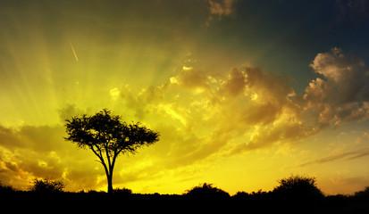 Beautiful savannah sunset, dramatic sky and thorn tree