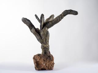 Fósil de un coral marino, vivió en los mares del  mesozoicos.