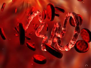 ebola virus in blood flow