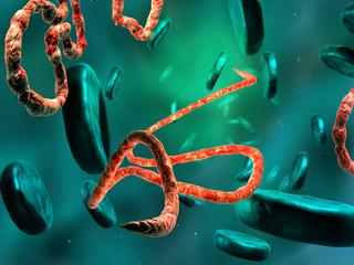3d Digital illustration of Ebola virus, Microscopic view.