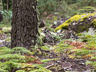 Bosque húmedo en el Parque nacional de las Islas Cíes