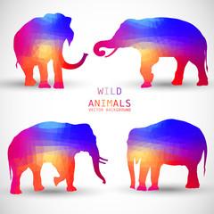 Set Colorful Geometric Silhouettes of Elephant