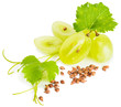 Grapes and grape seeds - 69567385