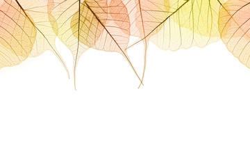 Border of Autumn color Leaves isilated on white