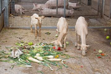 Artgerechte biologische Nutztierhaltung