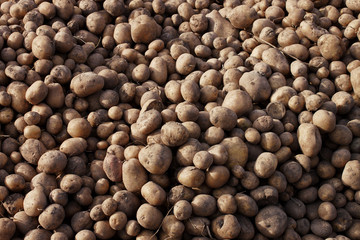A heap of potatoes